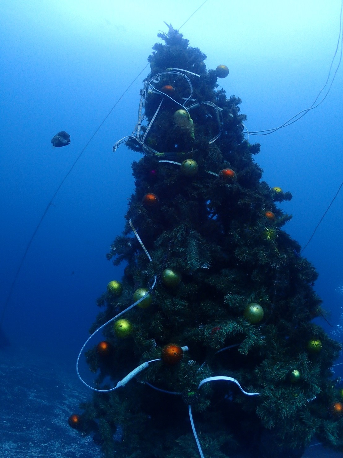 1223クリスマスツリーツアー_171224_0006